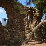 Ruined walls and trees settle in together