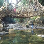 Root Bridge at Cherrapunjee