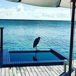 Foto di Conrad Maldives Rangali Island