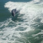 Dolphins following the boat and jumping in the wake.