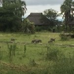 Caught this family of warthogs on the way back to my room