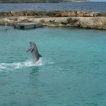 Dolphin Academy Curacao Foto