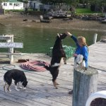The goat and dog get their biscuits every day when the Mail boat arrives
