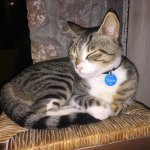 The true boss of the pub: Tigris the cat who are friendly to all costumers and enjoys late night