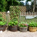 Growing your breakfast at Bluefish Bed & Breakfast