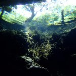 Cenotes dive - near surface