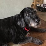 Ace is the Sunny Rock Bed and Breakfast  K9 Host. She knows when you arrive and is the first to