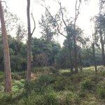 Cheong wildflower Sanctuary