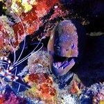 Coral Banded Shrimp & Moray Eel