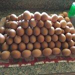 freshly picked & cleaned eggs