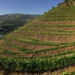 Walking in the famous Vale do Inferno vineyard