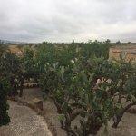 Photo of Agroturismo Es Quatre Cantons