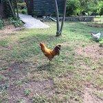 Hühner zu Besuch!