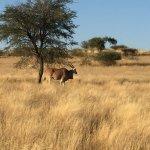 Photo of Bagatelle Kalahari Game Ranch