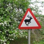 Herefordshire wildlife on #cycling #safari with www.wheelywonderfulcycling.co.uk