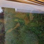 1st floor window view. Overgrowth of weed