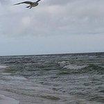 Birds having fun at the beach