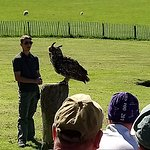 Watching a flying demonstration.
