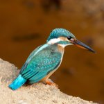 A beautiful kingfisher who treated us with both his beauty and his fishing capabilities