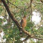 Foto di Jungle Lodges Kabini River Lodge