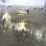 Gathering of Storks
