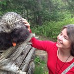 Petting the Porcupine