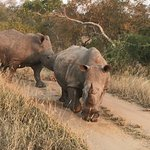 Photo of Elephant Plains Game Lodge