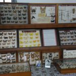Amazing collection of butterflies inside Butterfly Museum