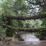 Double Decker Living Root Bridges in all its glory