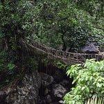 Single decker living root bridge on our way back.
