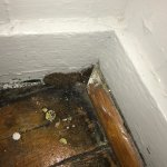 Corner of the room near window. This is steel wool shoved in a crack to keep mice out.