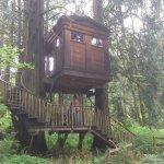Photo de Treehouse Point