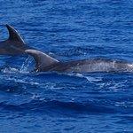 Photo de Tenerife Sailing Charters