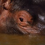Hippo Pools are worth a visit - u get close