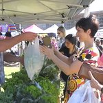 Red Hill Community Market Shopping at Old Tyabb Herbs Stall