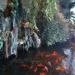 Koi pond inside