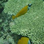 Photo of Coral Garden