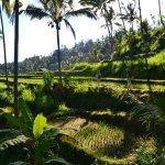 Trekking through the rice fields of Singaraja