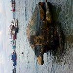 Foto de Crystal Dive Resort