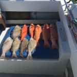 Fishing adventure on a charter boat.