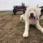 Photo de Dogsledding Iceland