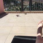 Balcony birds