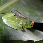 Photo de Arenal Natura Ecological Park