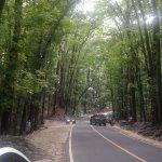 Mahogany Forest, along the road