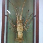 Lobster ?