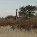 Photo of Kalahari Anib Lodge