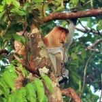 Foto de Sepilok Tropical Wildlife Adventure