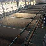 bean production