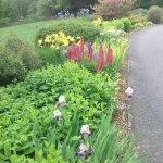 Part of the flower garden