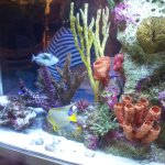 Love'd the Salt Water fish tank
